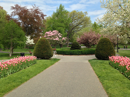 Boston Public Garden photo