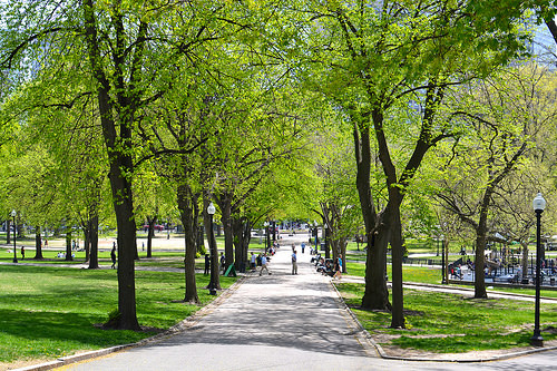 boston common photo